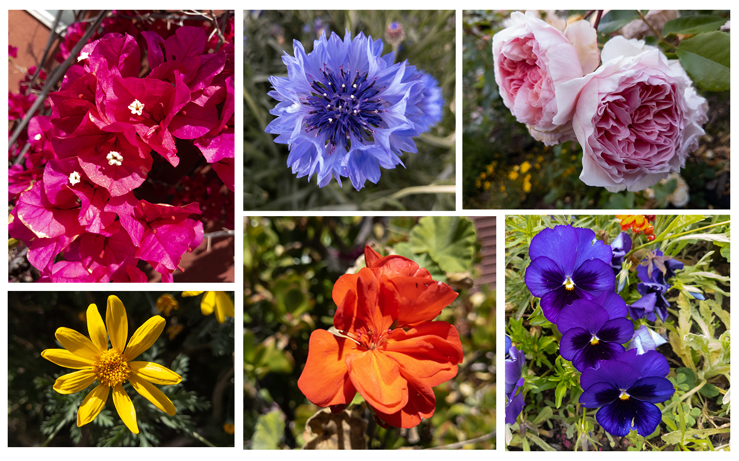 Images of colorful flowers